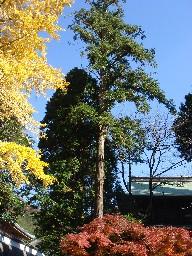 2007kamakura103