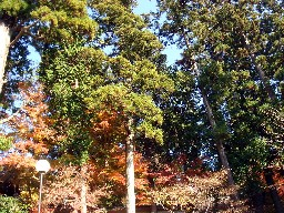 2007kamakura129