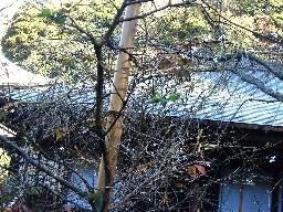 2007kamakura214
