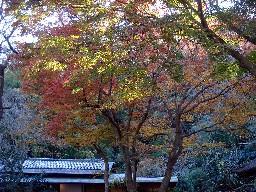 2007kamakura216