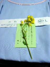 Nagasaki139