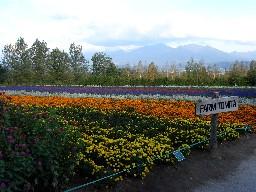 Shirokuma265